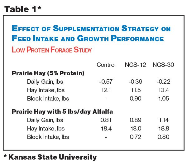 Protein Performance Supplementation Strategy